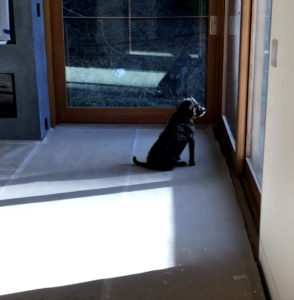 Bird, the family dog enjoys the view of her renovated LA home