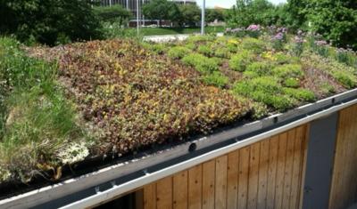 green-roof-extensive-system-400x235.jpg