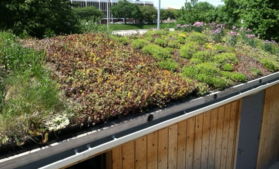 green-roof-extensive-system.jpg