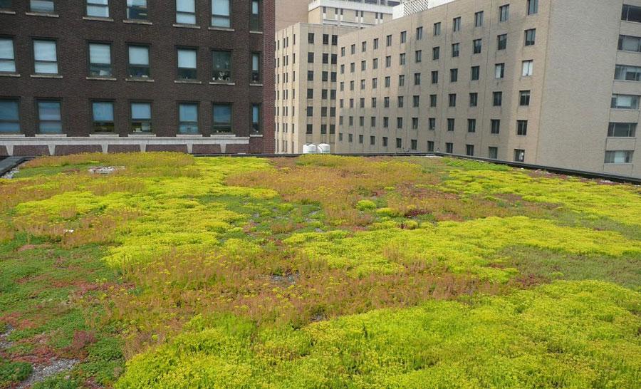 skyscraper-rooftop-garden.jpg